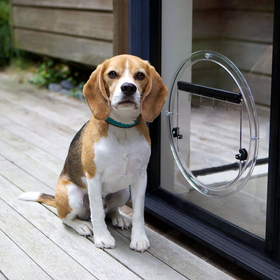 Beagle sat next to circle glass door