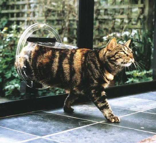A cat walking through pet door created on a glass